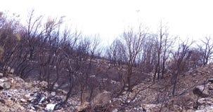 Forêt brûlée vers le bas par un incendie de forêt banque de vidéos