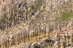 Forêt brûlée Images stock
