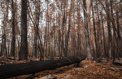 Forêt brûlée Image libre de droits