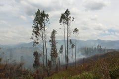 Forêt brûlante Image stock