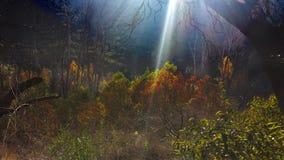 Forêt brillante Photos stock