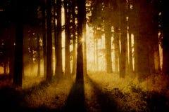 Forêt brumeuse illustration stock