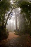 Forêt brumeuse Photos stock