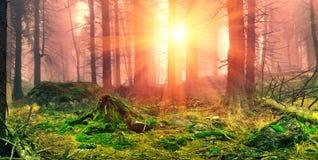 Forêt brumeuse. photo stock