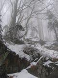 Forêt brumeuse Images stock