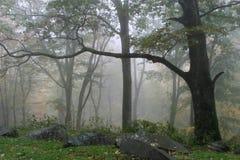 Forêt brumeuse image stock