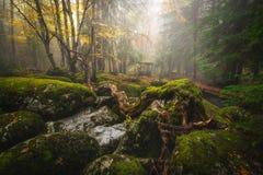 Forêt brumeuse Image libre de droits