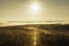 Forêt brumeuse au Belarus Image libre de droits