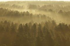 Forêt brumeuse au Belarus Photo libre de droits