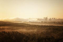 Forêt brumeuse au Belarus Minsk Images libres de droits
