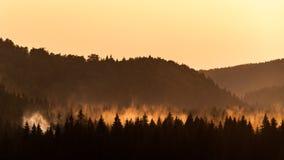 Forêt brumeuse au coucher du soleil images libres de droits