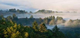 Forêt brumeuse au lever de soleil Photos stock
