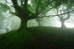 Forêt brumeuse au ressort Photographie stock libre de droits