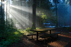 Forêt brumeuse avec le faisceau du soleil, stationnement de vallée de Lynn Photographie stock libre de droits