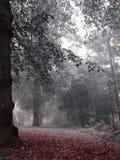 Forêt brumeuse avec sa terre couverte dans des feuilles rouges Images libres de droits
