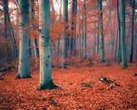 Forêt brumeuse d'automne photo libre de droits