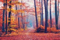 Forêt brumeuse d'automne photos libres de droits