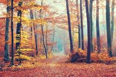 Forêt brumeuse d'automne photographie stock libre de droits