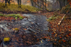 Forêt brumeuse d'automne avec un bon nombre des feuilles tombées et de petit courant de forêt Image libre de droits
