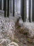 Forêt brumeuse d'hiver images libres de droits