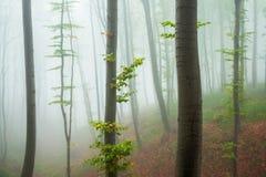 Forêt brumeuse dans la pente de montagne Photographie stock libre de droits
