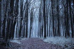 Forêt brumeuse de conte de fées Images libres de droits