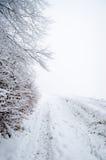 Forêt brumeuse de l'hiver Photographie stock