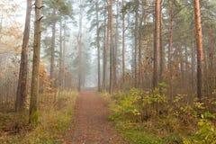 Forêt brumeuse de lumière du soleil de matin Images libres de droits