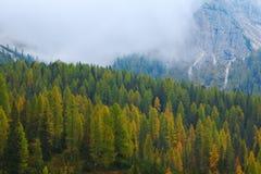 Forêt brumeuse de pin sur le flanc de coteau aux dolomites Photographie stock libre de droits