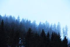 Forêt brumeuse de sapin Image stock
