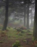 Forêt brumeuse foncée, maison de hobbit et elfe image libre de droits