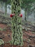 Forêt brumeuse l'explorant d'automne renversant de jeune femme dans le mounta images libres de droits