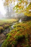 Forêt brumeuse, Mata da Albergaria, Geres Photo libre de droits
