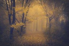 Forêt brumeuse mystérieuse avec un regard de conte de fées Photographie stock libre de droits