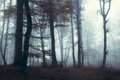 Forêt brumeuse sombre foncée photographie stock libre de droits