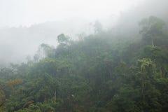 Forêt brumeuse sur la colline dans la forêt mountaFoggy sur la colline dans le secteur areainous montagneux photos stock