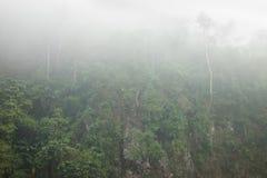 Forêt brumeuse sur la colline dans la forêt mountaFoggy sur la colline dans le secteur areainous montagneux photographie stock libre de droits