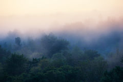 Forêt brumeuse tôt de matin Photos libres de droits