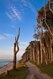 Forêt côtière Photos stock