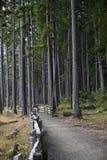 Forêt côtière Image libre de droits