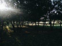 Forêt cachée Photos libres de droits