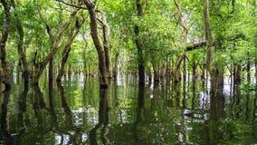 Forêt Cambodge de palétuvier de Looded photo stock