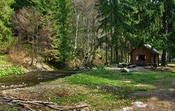 Forêt carpathienne Photos stock