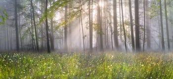 Forêt carpathienne magique à l'aube Photos stock