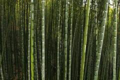 Forêt chinoise de montagne Image libre de droits