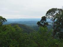 Forêt, colline et brouillard Images libres de droits