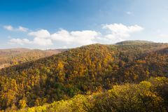 Forêt colorée d'arbres en automne Photographie stock libre de droits