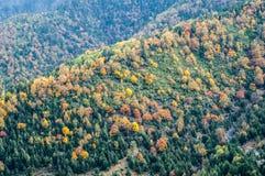 Forêt colorée d'automne Photos stock