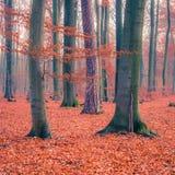 Forêt colorée d'automne Photo stock