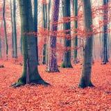 Forêt colorée d'automne Photographie stock
